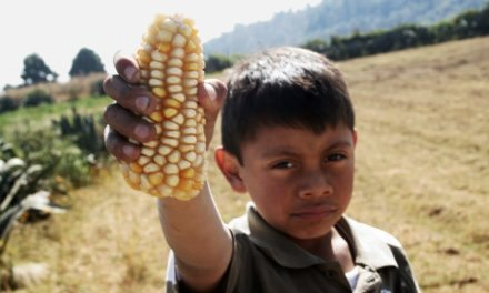 """¿Tortillas de maíz transgénico? México dice """"No, gracias"""""""