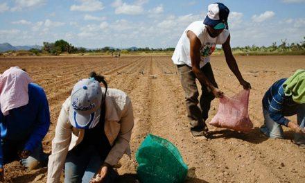 Más del 50% de la tierra productiva de América Latina, en manos del 1%
