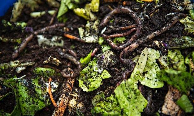 En la basura podría estar la solución para generar energía limpia